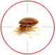 Bed bug control in London