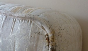 bed bugs control london