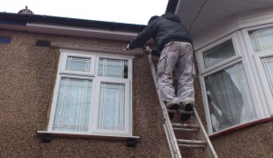 domestic birds control in london